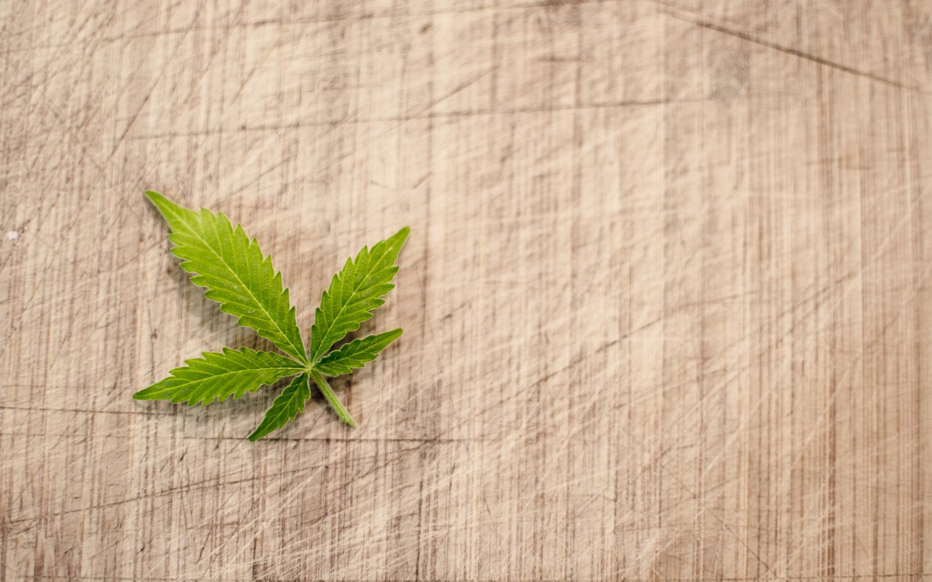 Cannabis terapeutica: l'appello dei pazienti al governo per un disatteso diritto alla salute